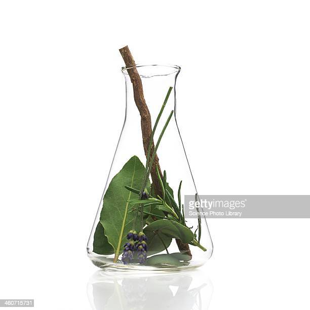 medicinal plants, conceptual image - eucalyptus tree stock pictures, royalty-free photos & images