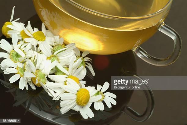 Medicinal tea Camomiletea Matricariatea german chamomile Chamomilla recutita