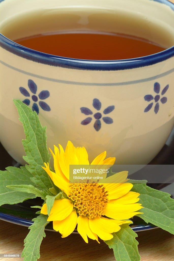 Medicinal tea made of Anil : ニュース写真