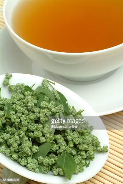 Medicinal tea made of Artemisia vulgaris officinalis Mugwort Wegwood