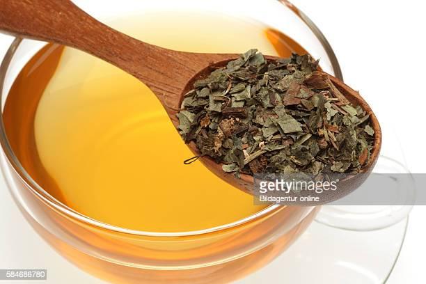 Medicinal tea made of Asarabacca Hazelworth Asarum europaeum