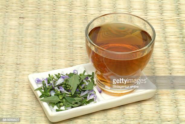 Medicinal tea made of Ban Zhi Lian Barbed Skullcap Scuttellaria barbata