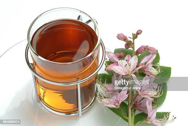 Medicinal tea made of Burning bush, gas plant, Dictamnus albus, Dittamo.
