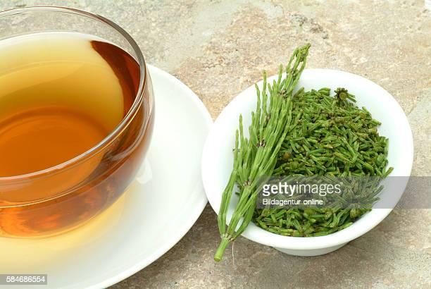 Medicinal tea made of Horsetail medicinal plant Equisetum arvense
