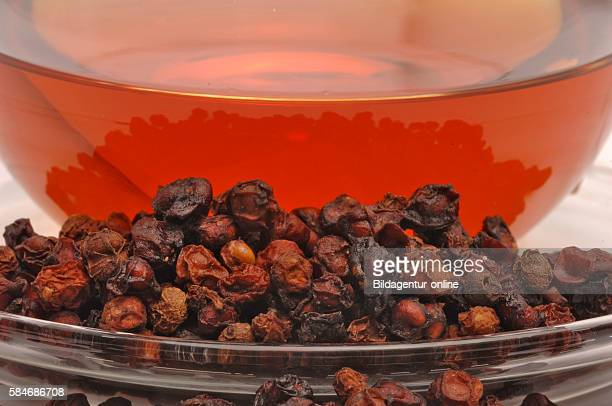 27 Schisandra Pictures, Photos & Images - Getty Images