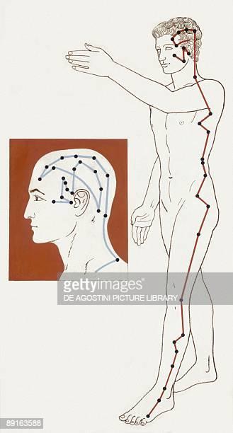 Medicine Human body Acupuncture illustration