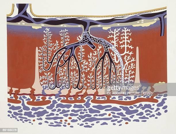 Medicine Human body Placenta illustration