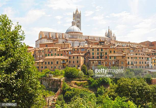 medieval houses and the siena cathedral - siena italy stock photos and pictures