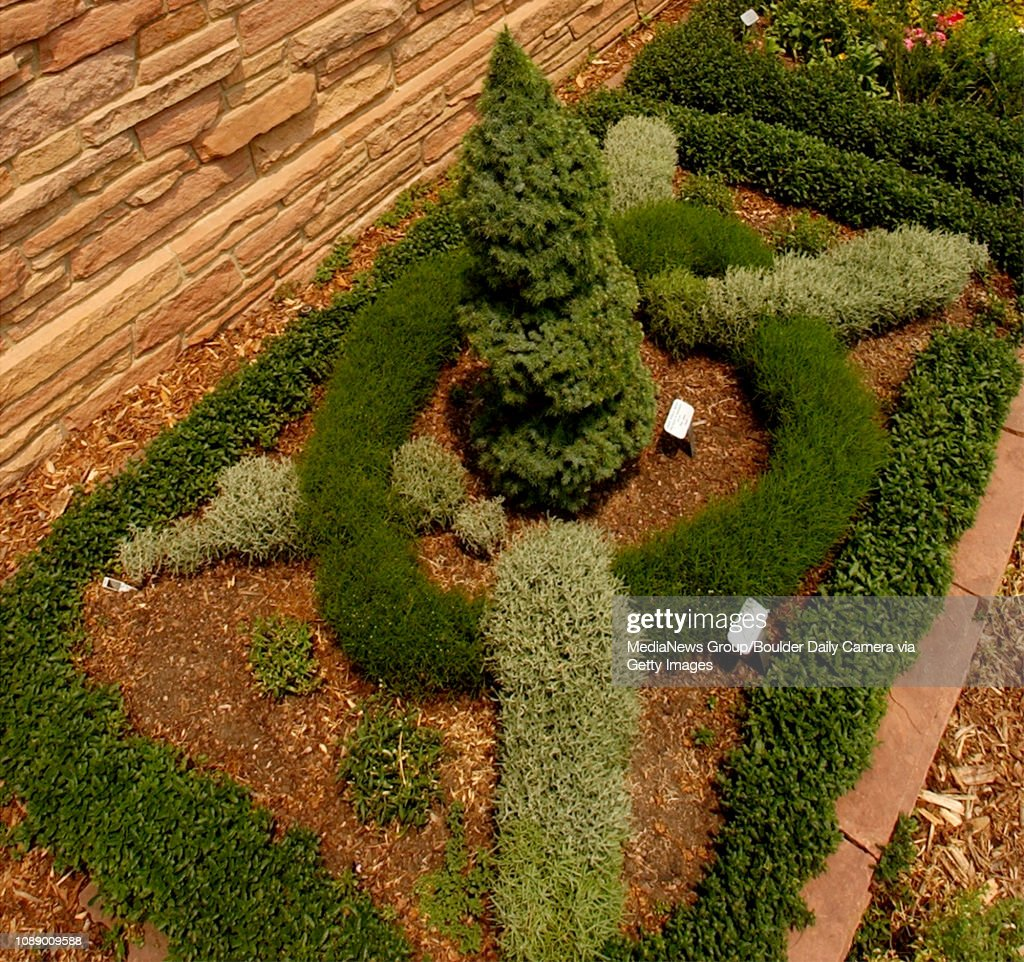 Medieval knot garden with a dwarf Albert aspruce surrounded