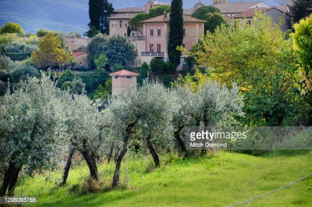 medieval montefalco in umbria italy - モンテファルコ ストックフォトと画像