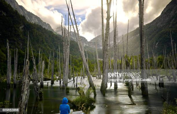meditation in sunked larchs forest of lagoon alerces with mountains - espiritualidad stock pictures, royalty-free photos & images