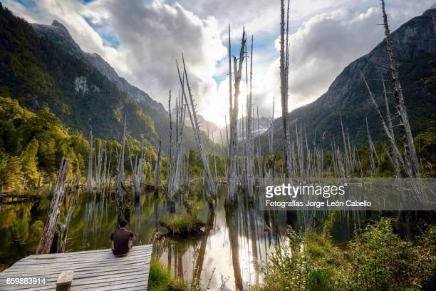 meditation in sunked larchs forest of lagoon alerces with mountains in the afternoon sunlight - espiritualidad stock pictures, royalty-free photos & images