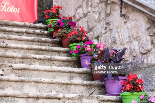 mediterranean city, steeps with flowers multi colored, of old town kotor, travel, montenegro - montenegro photos et images de collection