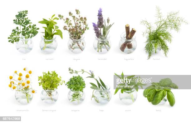 mediterranean cuisine fresh herbs - chamomile tea stock photos and pictures
