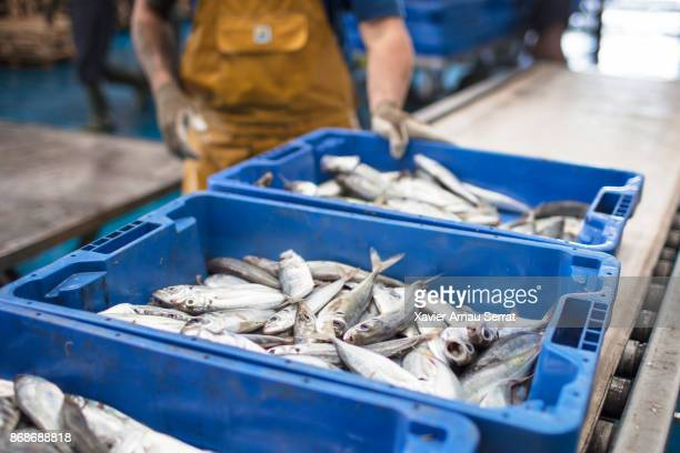 mediterranean fresh fish ready for auction - auction stock pictures, royalty-free photos & images