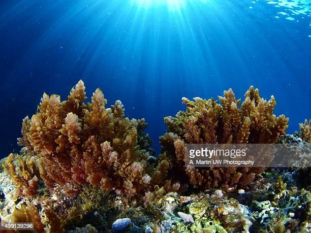 Mediterranean underwater scene