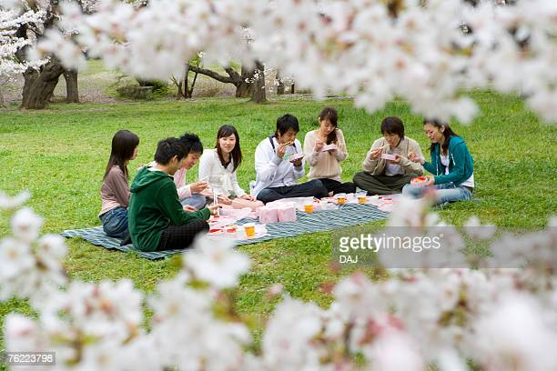 medium group of young people enjoying lunch surrounded with cherry blossoms, front view, side view, japan, differential focus - medium group of people - fotografias e filmes do acervo