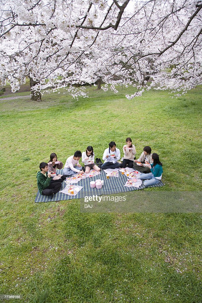 Medium group of young people enjoying lunch surrounded with cherry blossoms, high angle view, Japan : Photo