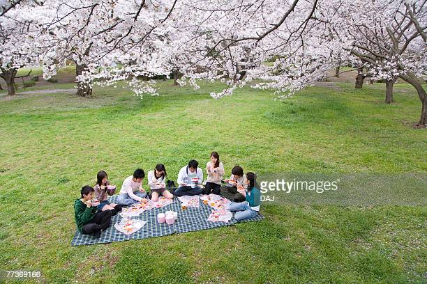Medium group of young people enjoying lunch surrounded with cherry blossoms, high angle view, Japan