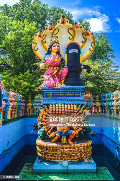 meenakshi statue of shri naga pooshani amman kovil - imagebook stock pictures, royalty-free photos & images