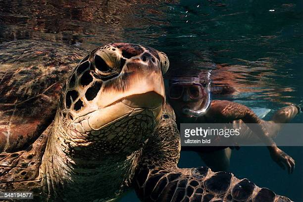 Meeresschildkröte und Taucherin im Meer bei den Komoren - 1995
