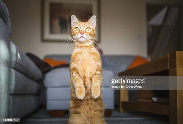 meerkat cat - practical joke stock photos and pictures