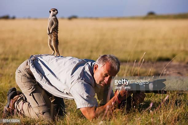 meerkat climbs on photographer in the kalahari desert - mangusta foto e immagini stock