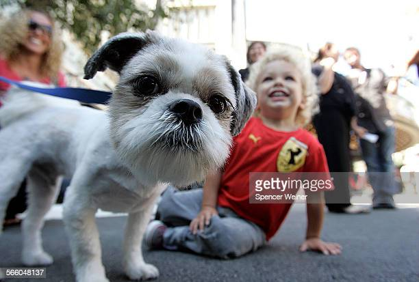 Meet and greet at the grove. Dogs and their human companions gathered at an event sponsored by dogfood company WholeMeals Food for Dogs, September...