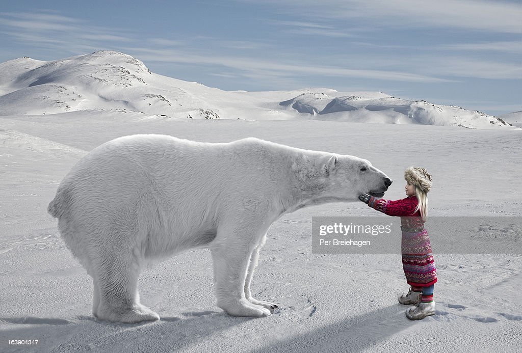 Meeting a Polar Bear : Stock Photo