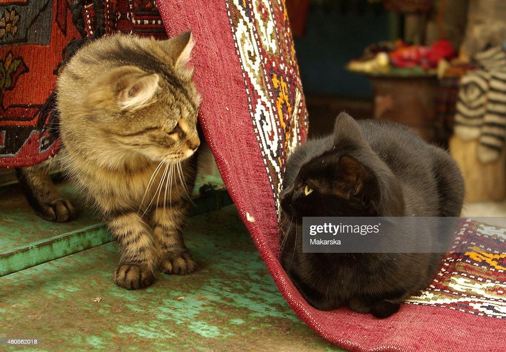 Meeting Cats : Stock Photo