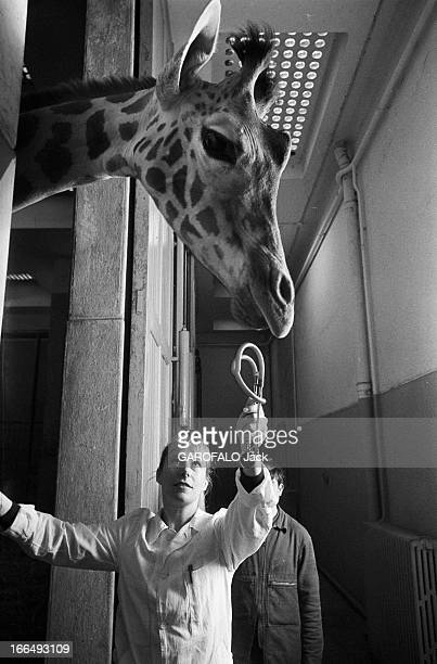Meeting With Maryvonne LeclercCassan Veterinary At The Vincennes Zoo France Vincennes 7 avril 1978 Maryvonne LECLERCCASSAN est vétérinaire au zoo de...