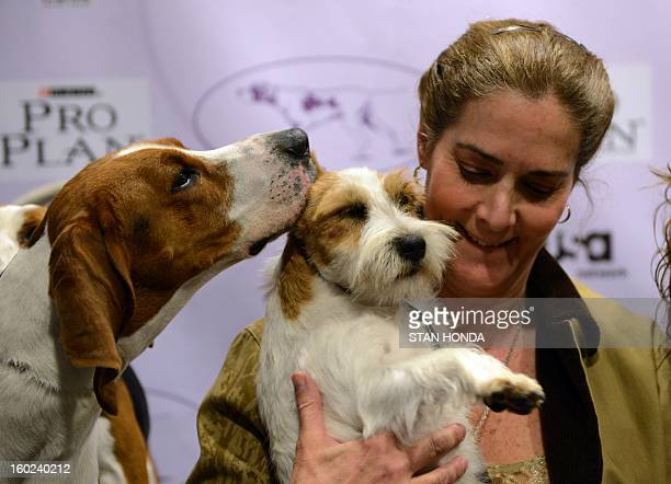 Meg a Treeing Walker Coonhound kisses Turbo a Russell Terrier held by owner Candace Lundin during a press conference January 28 2013 by The...