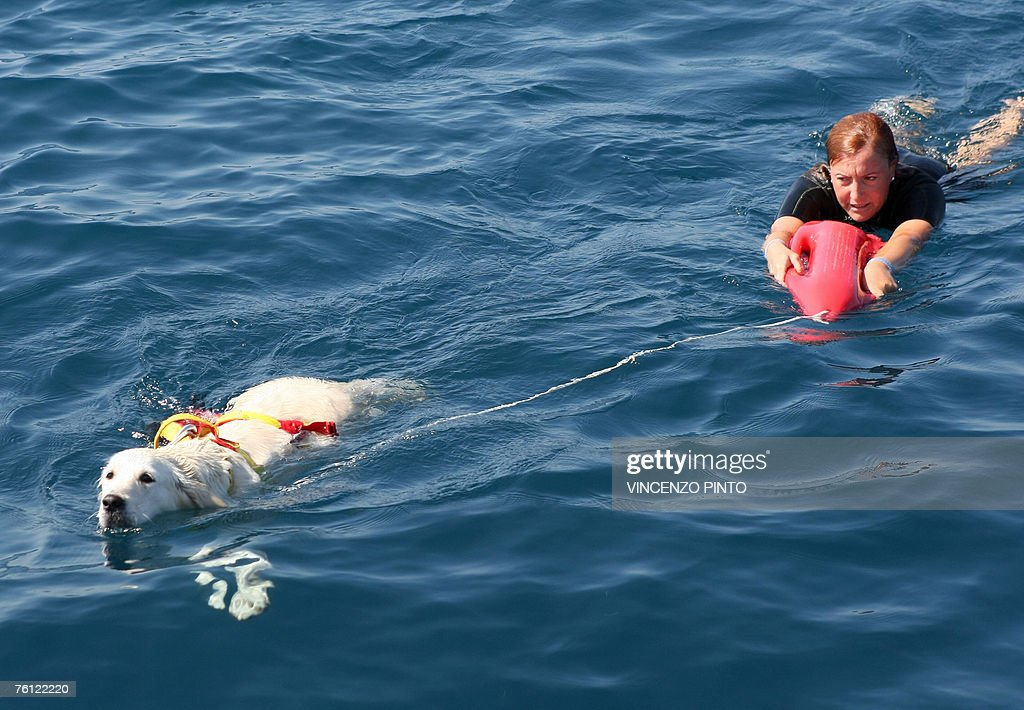 DOLMADJIAN -- Megan, a golden retriever rescue dog, pulls her instructor Maria-Rosaria Cirillo in the water 16 August 2007, during her daily patrol with Eva, another dog, and instructor Roberto Gasbarri in the tirrean sea of Civitavecchia, 80 km northwest of Rome.