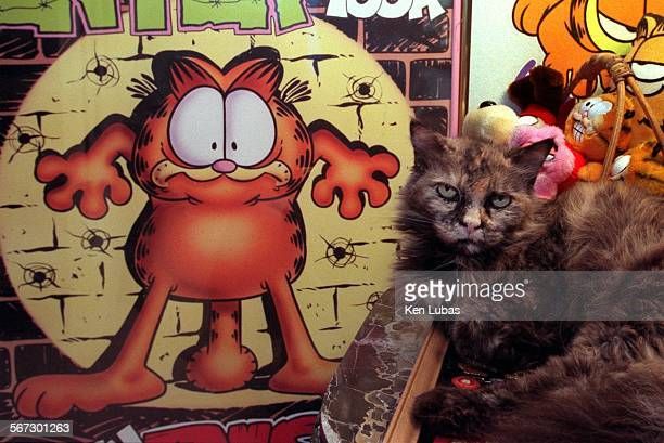 MEgarfield3kl8/14/98––DUARTE––Gizmo the cat is surrounded by Garfield items as he rest on end table of family home Photo/Art by^^^