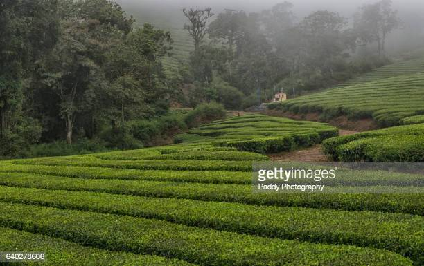 meghamalai, south india - grounds stock pictures, royalty-free photos & images