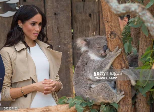 Meghan Duchess of Sussex meets a koala as she visits Taronga Zoo on October 16 2018 in Sydney Australia The Duke and Duchess of Sussex are on their...