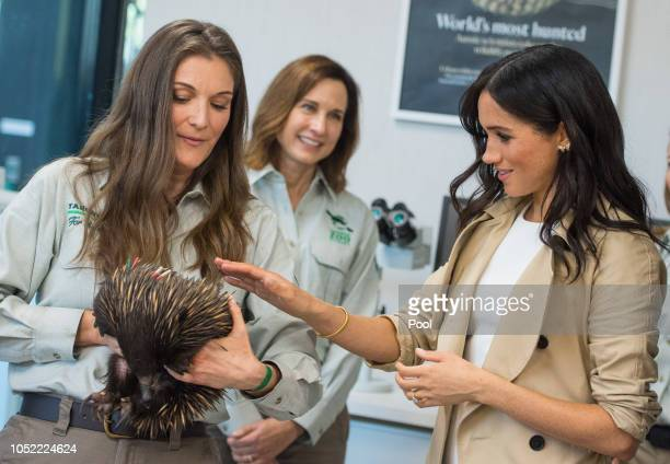 Meghan Duchess of Sussex meets an echidna during a visit to Taronga Zoo on October 16 2018 in Sydney Australia The Duke and Duchess of Sussex are on...