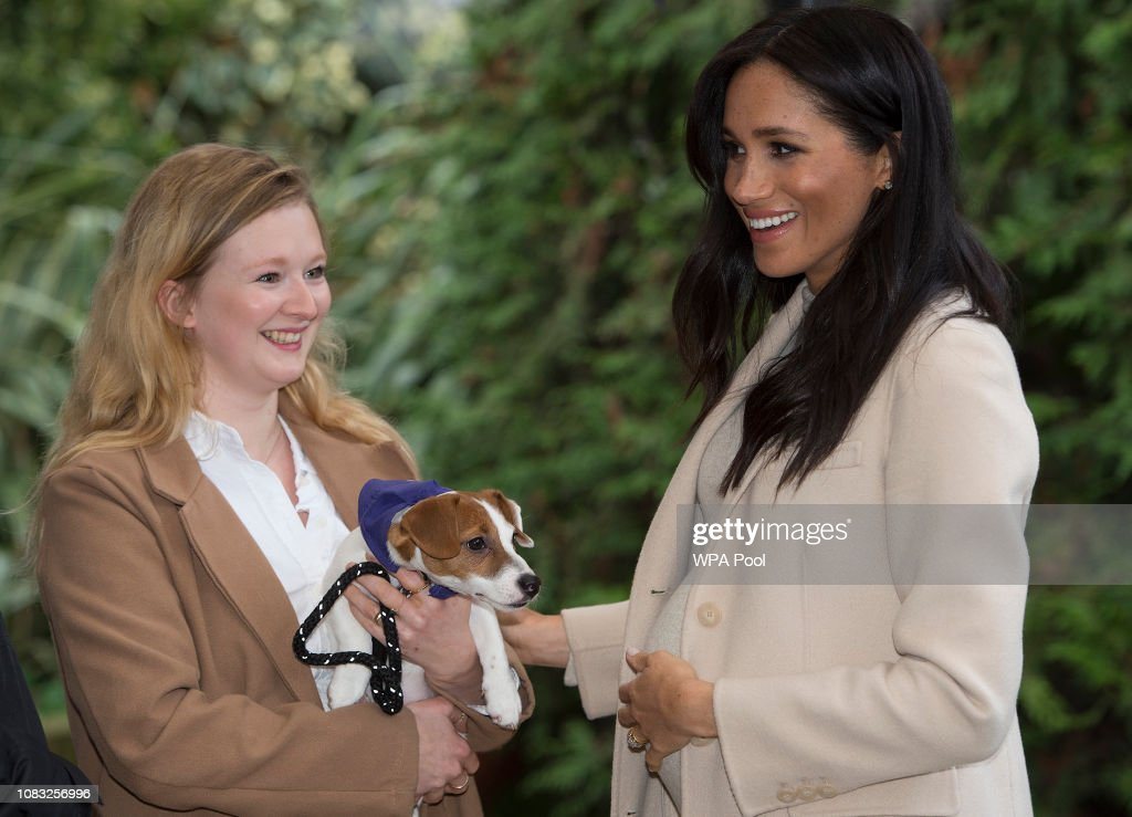 The Duchess Of Sussex Visits Mayhew : News Photo