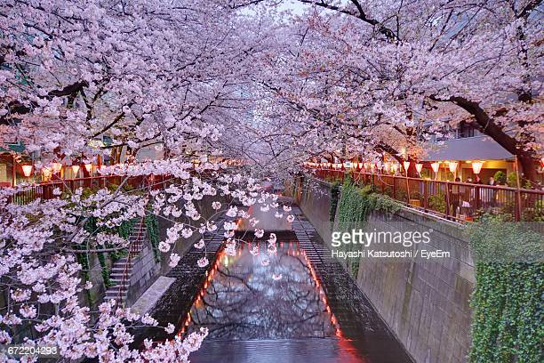 meguro river amidst cherry blossom trees - cherry blossom in full bloom in tokyo stock pictures, royalty-free photos & images