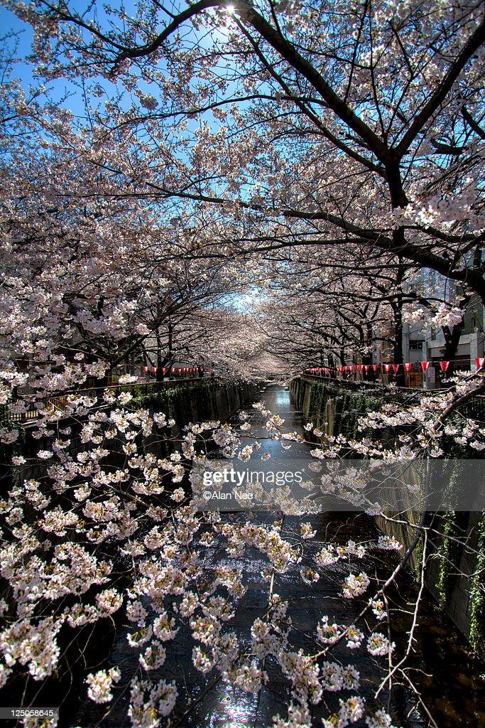 Meguro River : Foto de stock