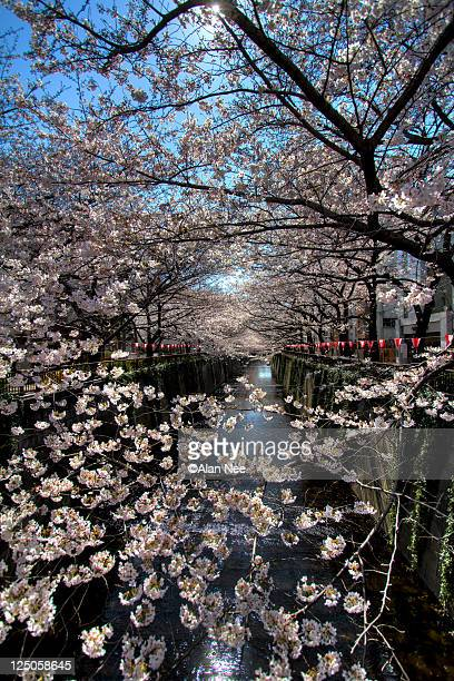 meguro river - nee nee fotografías e imágenes de stock