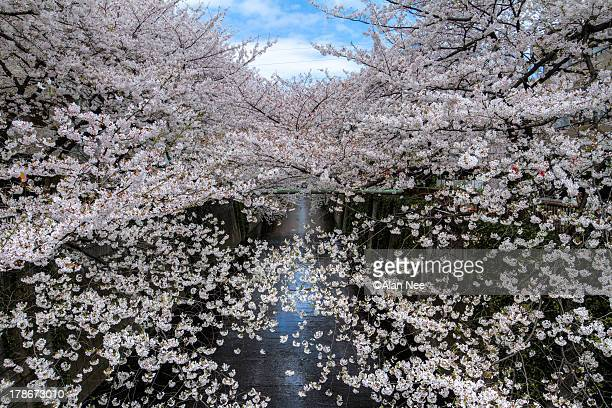 meguro river - nee nee stock pictures, royalty-free photos & images