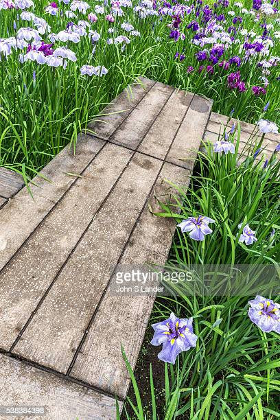 Meigetsuin Iris Garden Meigetsuin also known as Ajisaidera or Hydrangea Temple since many Hime Ajisai Princess Hydrangea are planted on the grounds...