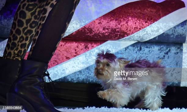 Mel B's dog Cookie poses on stage during A Brutally Honest Evening With Mel B in support of Women's Aid at The Savoy Theatre on September 1 2019 in...