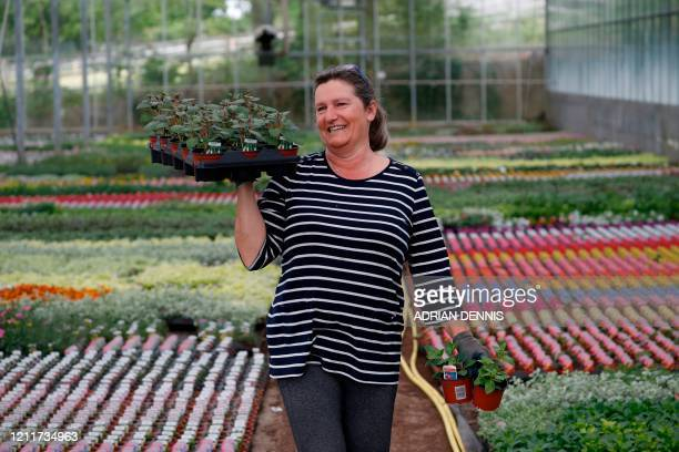 Melanie Kemp the wife of Nursery owner Royden Kemp walks with a tray of plants ready to be delivered to a local gardener at Sandiacre Nursery near...