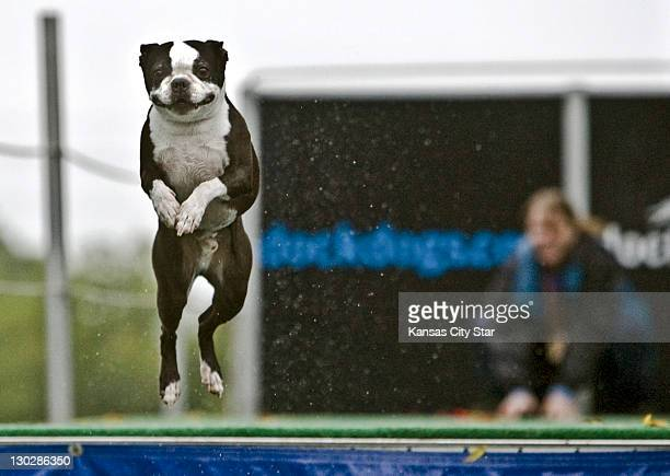 Melanie Lehmann watches her Boston Terrier Wilbur leap off the dock during the Dock Dogs competition at the Blue Springs Missouri Fall Fun Festival...