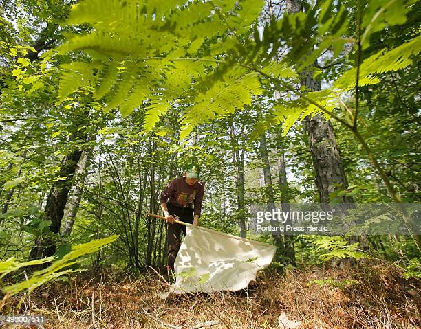 Melanie Renell uses a flag a square piece of corduroy attached to a broom stick to gather ticks in the woods at the Kennebunk Plains in Kennebunk on...