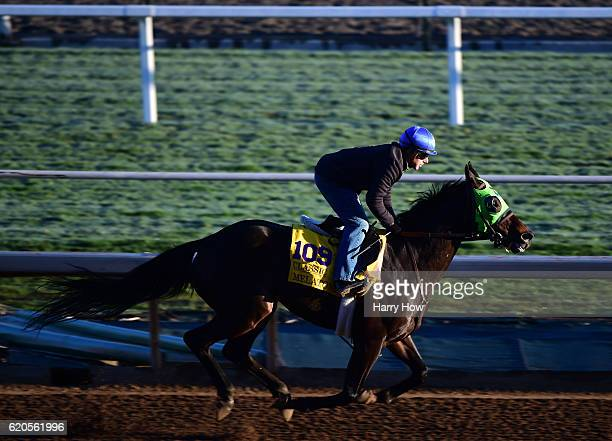 Melatonin during training for the Classic in the 2016 Breeders' Cup World Championships at Santa Anita Park on November 2 2016 in Arcadia California