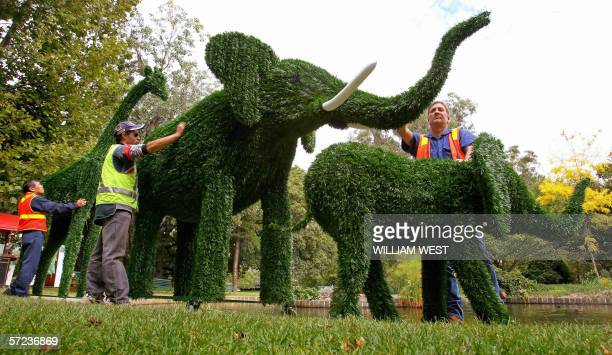 Brad Foster and Nev Miller move their elephant and giraffe hedges which are one of the hundreds of exhibits on display at the Melbourne International...