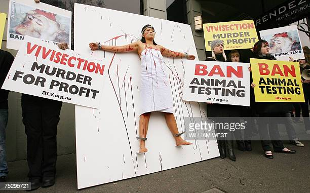 Covered in fake blood Animal Liberation Victoria activist Jamie Yew is strapped to a giant vivisection board as part of three days of protest against...